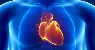 kalp nedir